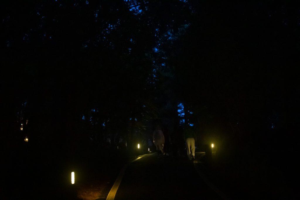 2019-08-08 阿里山三日遊 Day2 - 阿里山森林遊樂區