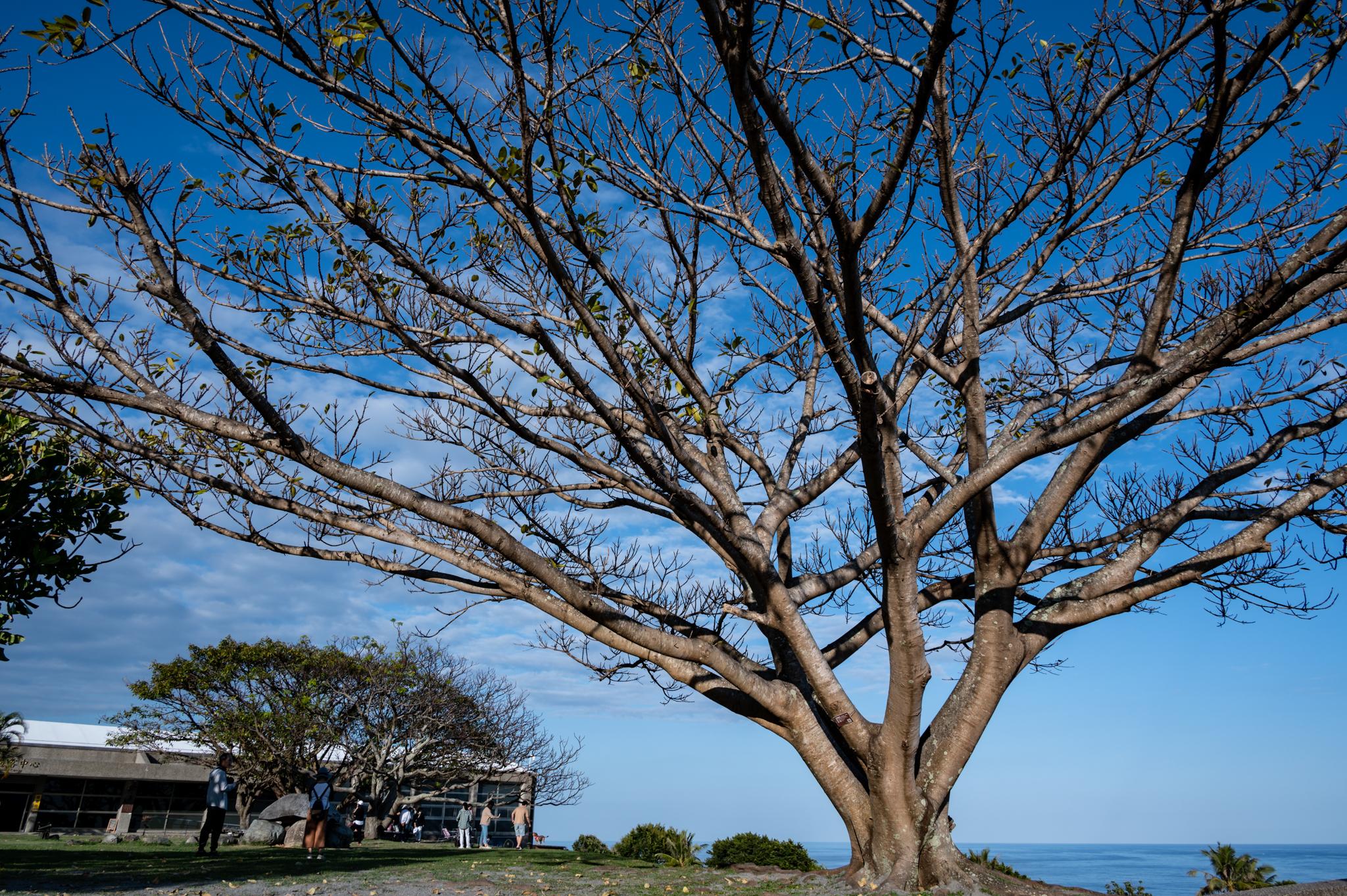 2021-02-06 農曆年前出遊 - 東部海岸國家風景區管